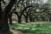 The area around the Grove Plantation House was breathtaking. Enormous live oaks all over the place. Impossible to capture it all, even with the widest lens (which I didn't have anyway).